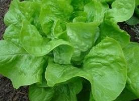 Salata eco, 3 buc - oferta