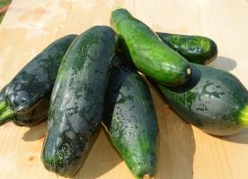 Zucchini bio mare, buc=25-30 cm