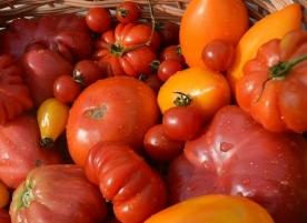 Rosii bio, ultimele kg