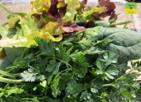 Verde bun bio - salata, kale, spanac, coriandru eco