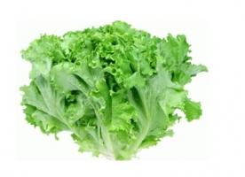 Salata creata verde eco, gi