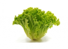 Salata Batavia bio, gi
