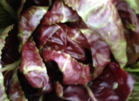 Cicoare rosie bio