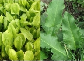 Mix verde ciorba