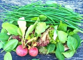 Mix bio de sezon: spanac, ridiche, frunze de ceapa, patrunjel verde