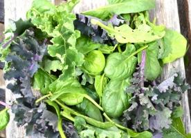 Kale baby verde si rosu, spanac bio, ceapa de tuns bio