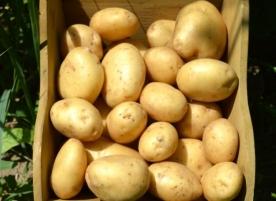 Cartofi albi bio