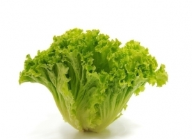 Salata Romana bio,gi