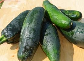 Dovlecel zucchini bio, buc